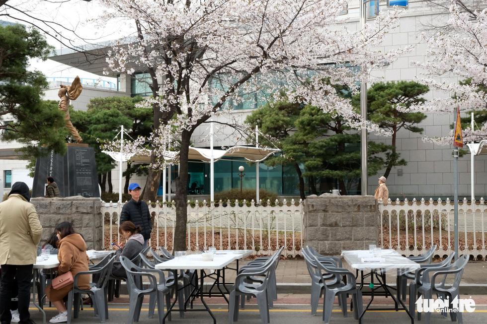 Hoa anh đào nở rợp trời hút hồn giới trẻ Seoul - Ảnh 20.