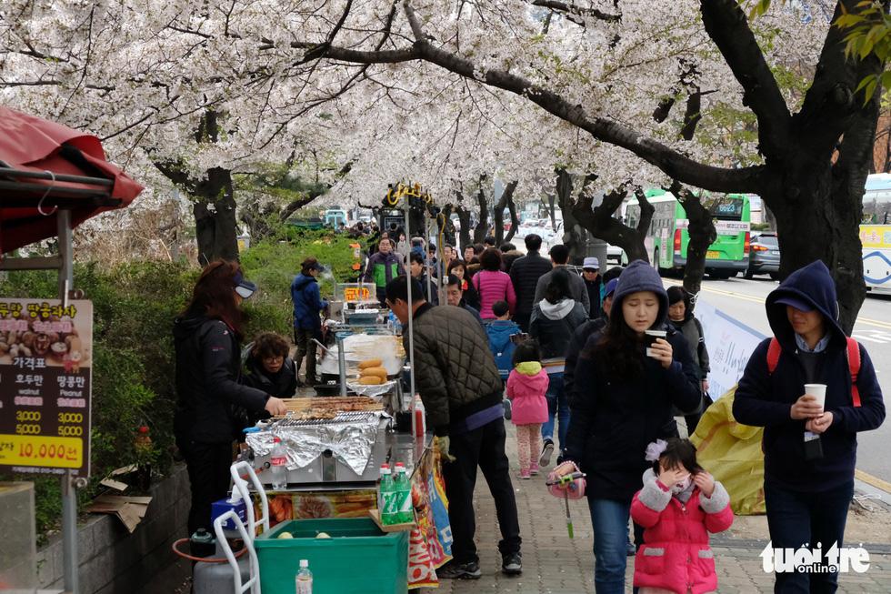 Hoa anh đào nở rợp trời hút hồn giới trẻ Seoul - Ảnh 5.