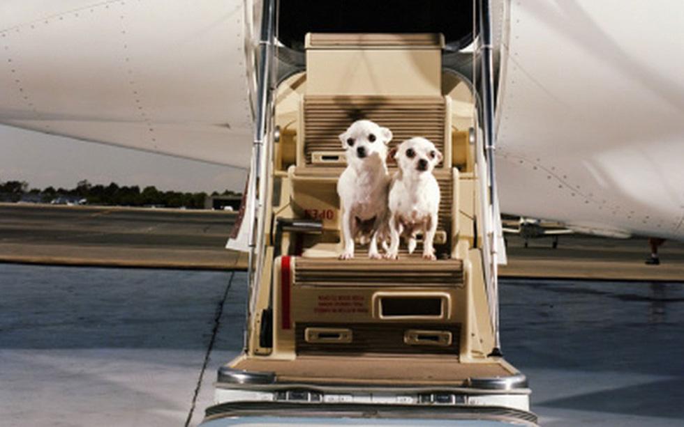 3 mẹo đi du lịch cùng thú cưng - Ảnh 1.