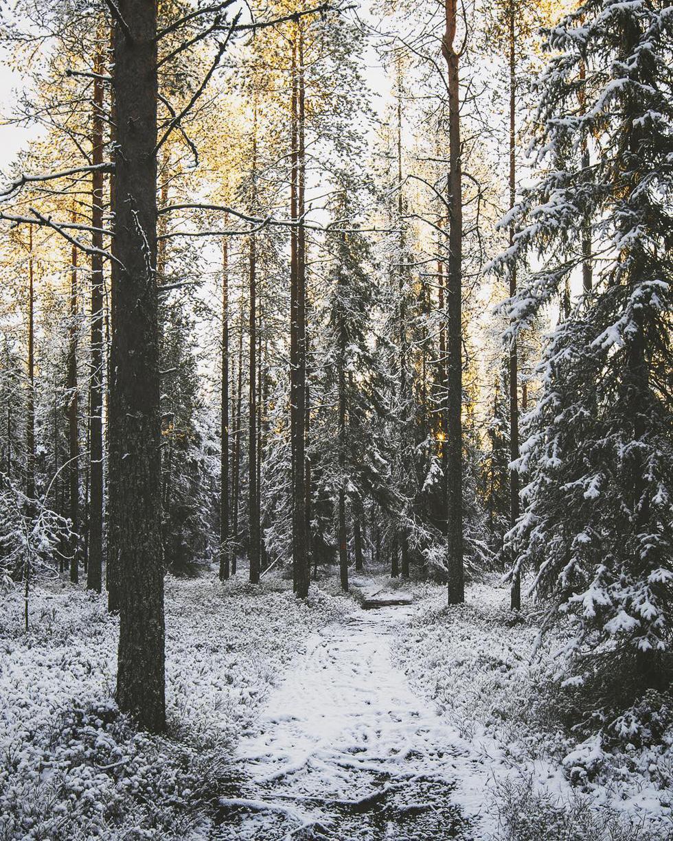 Đảo 'bốn mùa' Phần Lan đẹp mê hồn nhìn từ trên cao - Ảnh 14.