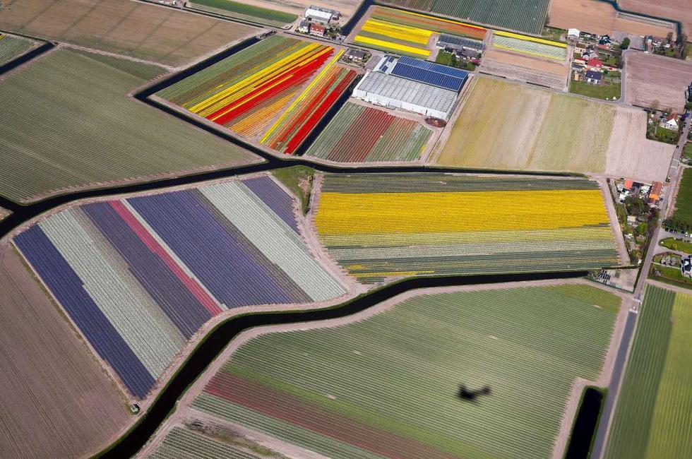 Rực rỡ mùa hoa tulip ở Hà Lan, hoa chuông xanh ở Bỉ - Ảnh 1.