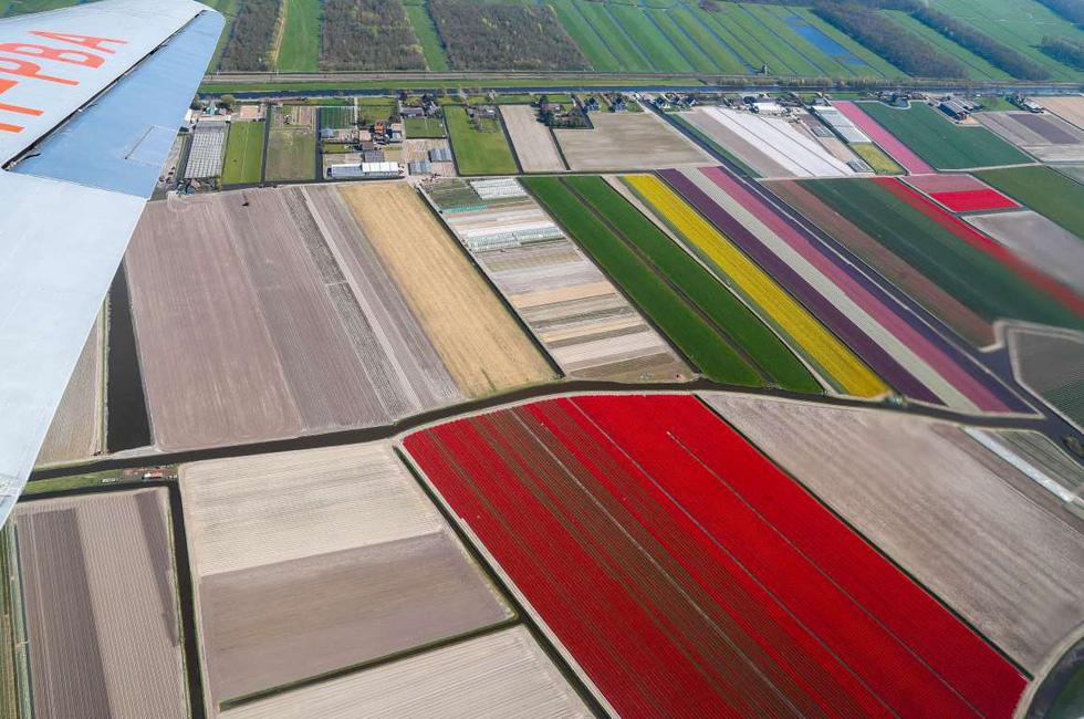 Rực rỡ mùa hoa tulip ở Hà Lan, hoa chuông xanh ở Bỉ - Ảnh 9.