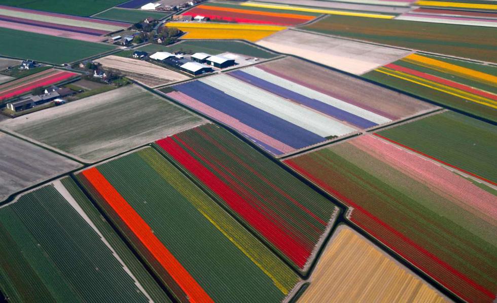 Rực rỡ mùa hoa tulip ở Hà Lan, hoa chuông xanh ở Bỉ - Ảnh 10.
