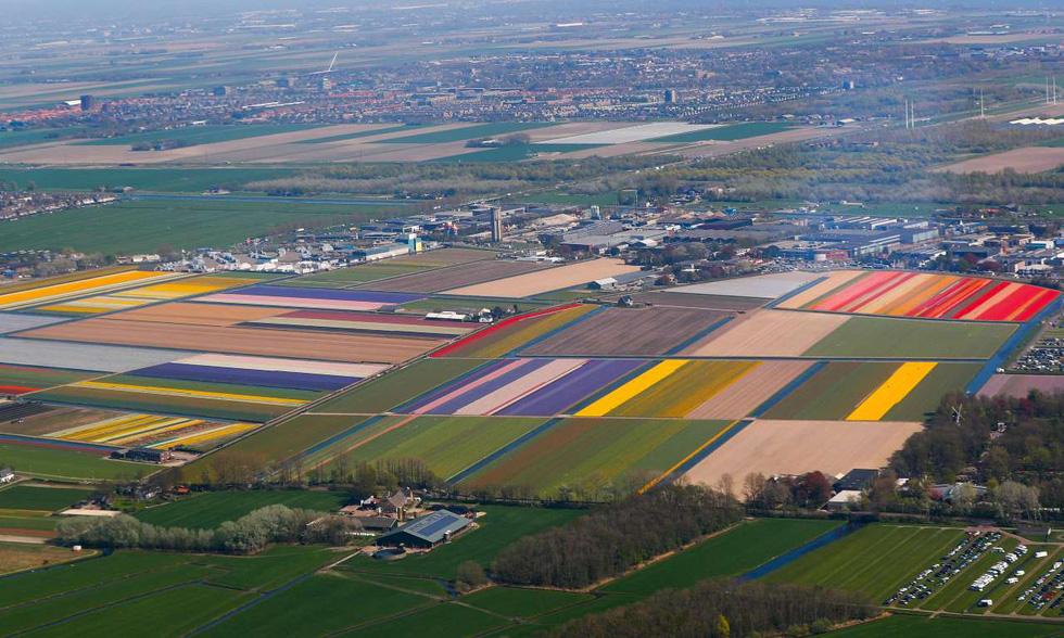 Rực rỡ mùa hoa tulip ở Hà Lan, hoa chuông xanh ở Bỉ - Ảnh 3.