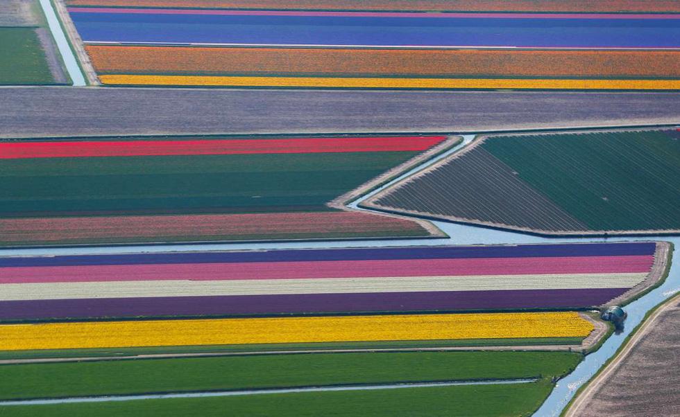 Rực rỡ mùa hoa tulip ở Hà Lan, hoa chuông xanh ở Bỉ - Ảnh 4.