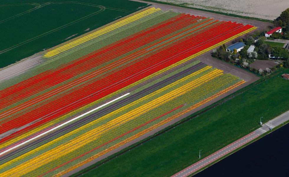 Rực rỡ mùa hoa tulip ở Hà Lan, hoa chuông xanh ở Bỉ - Ảnh 5.