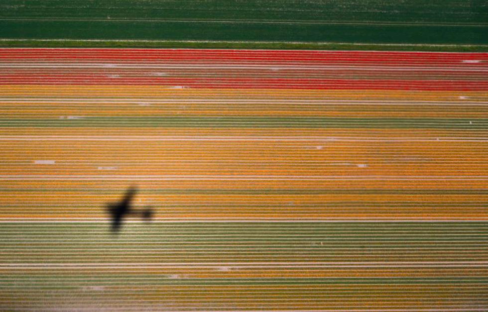 Rực rỡ mùa hoa tulip ở Hà Lan, hoa chuông xanh ở Bỉ - Ảnh 6.