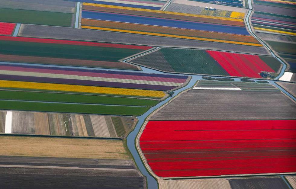 Rực rỡ mùa hoa tulip ở Hà Lan, hoa chuông xanh ở Bỉ - Ảnh 8.
