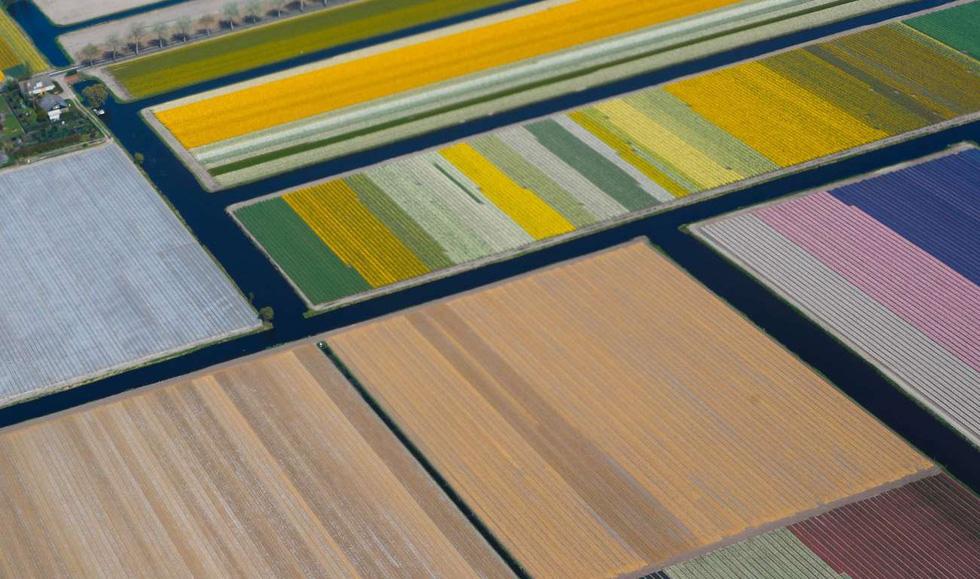 Rực rỡ mùa hoa tulip ở Hà Lan, hoa chuông xanh ở Bỉ - Ảnh 7.