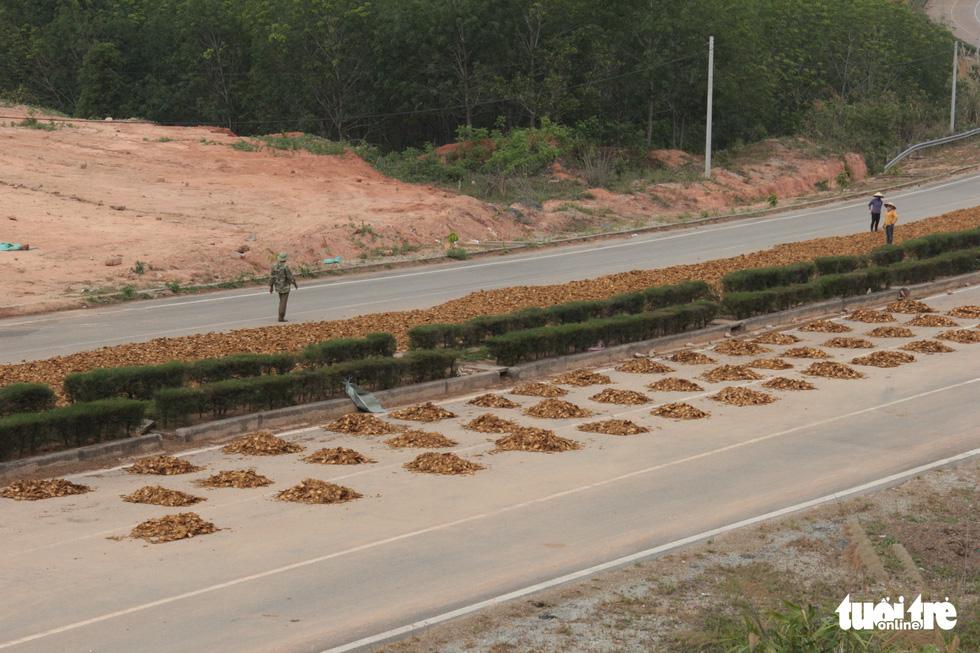 Đường đẹp nhất Tây Nguyên thành... sân phơi nông sản - Ảnh 5.