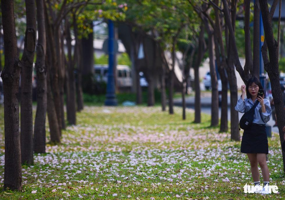 Sài Gòn có thêm mùa hoa kèn hồng - Ảnh 13.