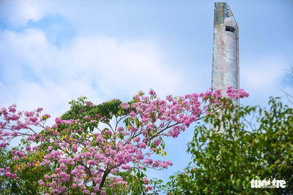 Sài Gòn có thêm mùa hoa kèn hồng - Ảnh 7.