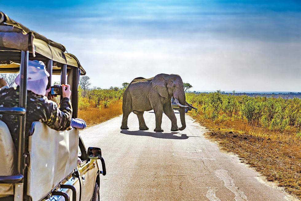 Mùa đông nam bán cầu: đi Úc ngắm tuyết, đi Nam Phi ngắm voi - Ảnh 5.