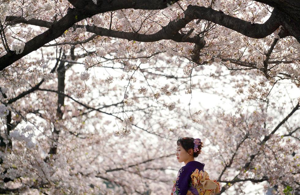 Ngất ngây hoa xuân nở rộ khắp thế giới - Ảnh 1.