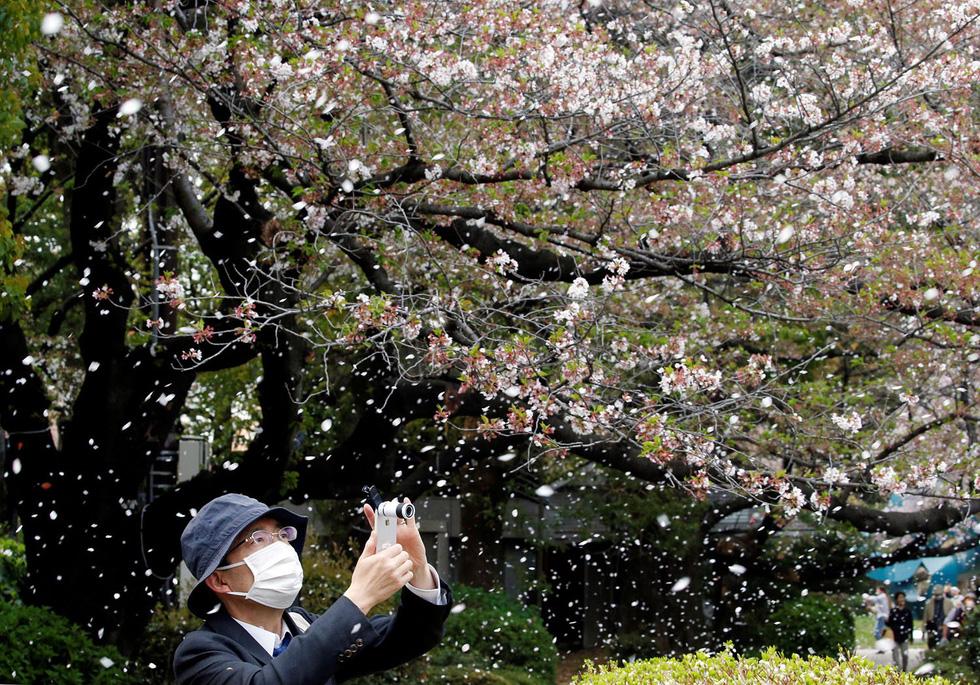 Ngất ngây hoa xuân nở rộ khắp thế giới - Ảnh 11.