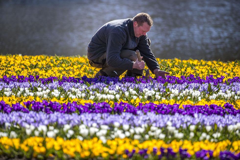 Ngất ngây hoa xuân nở rộ khắp thế giới - Ảnh 2.