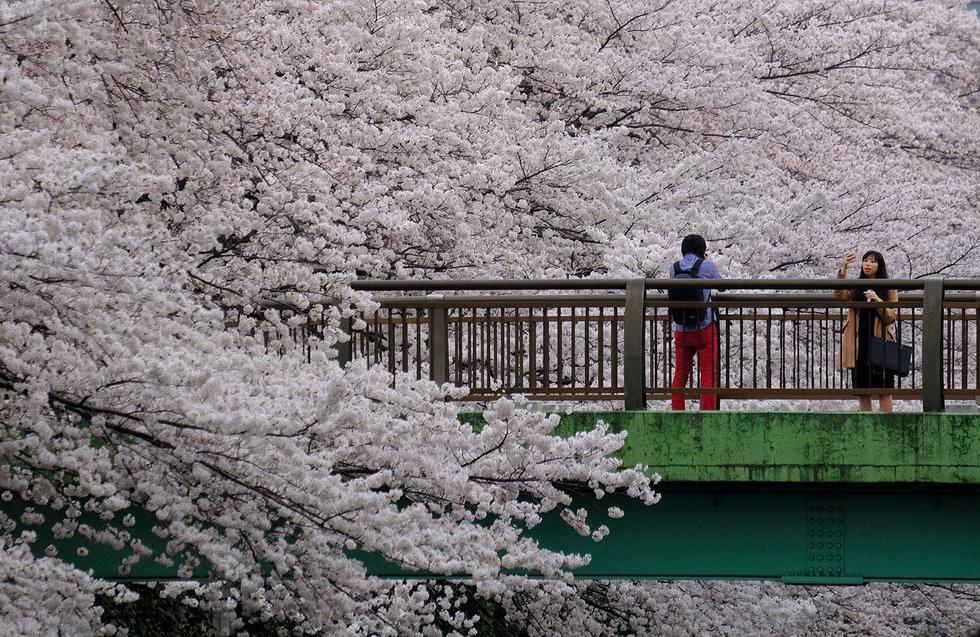 Ngất ngây hoa xuân nở rộ khắp thế giới - Ảnh 9.