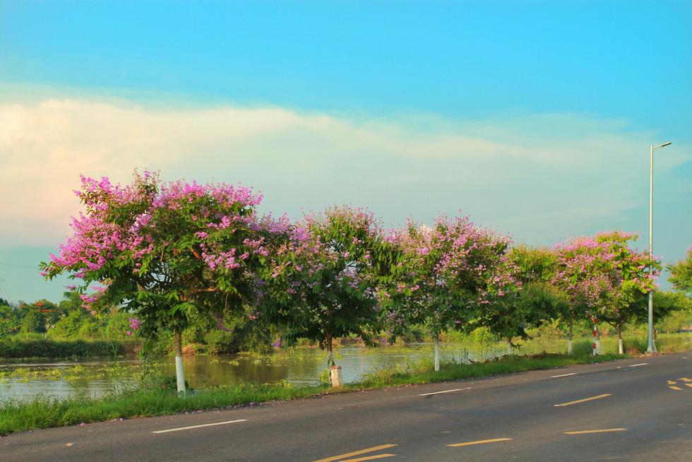 Con đường hoa phượng hút bạn trẻ ở Đồng Tháp - Ảnh 12.