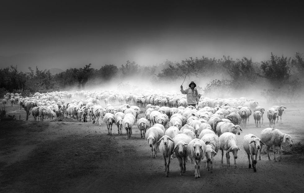 Đàn cừu trở về ở Ninh Thuận nổi bật trên National Geographic - Ảnh 5.