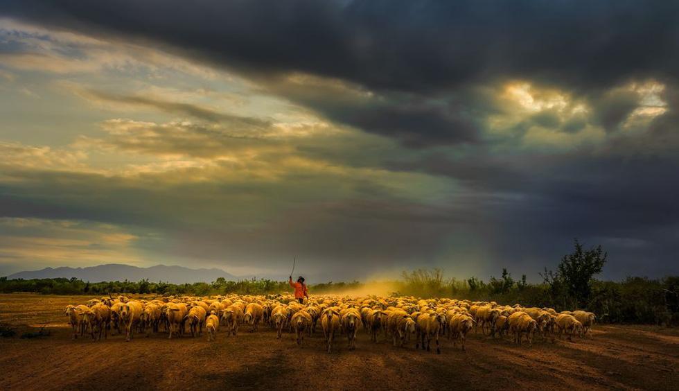 Đàn cừu trở về ở Ninh Thuận nổi bật trên National Geographic - Ảnh 4.