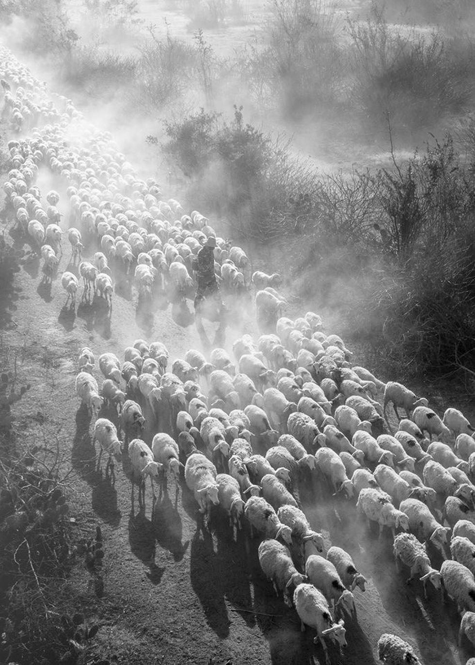 Đàn cừu trở về ở Ninh Thuận nổi bật trên National Geographic - Ảnh 2.