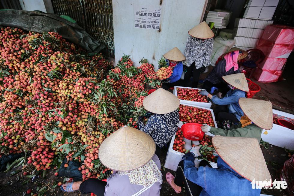 Vải Lục Ngạn đầu mùa đã rớt giá, chỉ còn 6.000-8.000đ/kg - Ảnh 11.