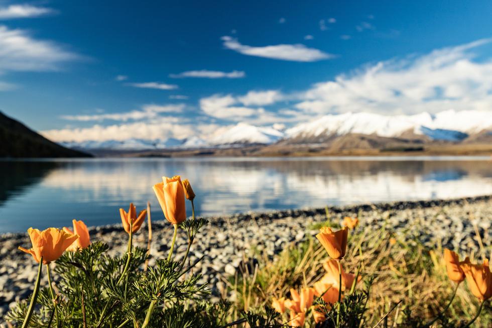 New Zealand - mùa thu mê đắm lòng người - Ảnh 6.