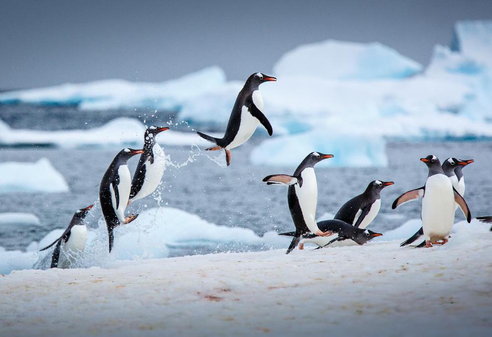 Đi chơi 2018: ghé Nam Cực, New Zealand, Trung Quốc, Mexico, Bồ Đào Nha - Ảnh 1.