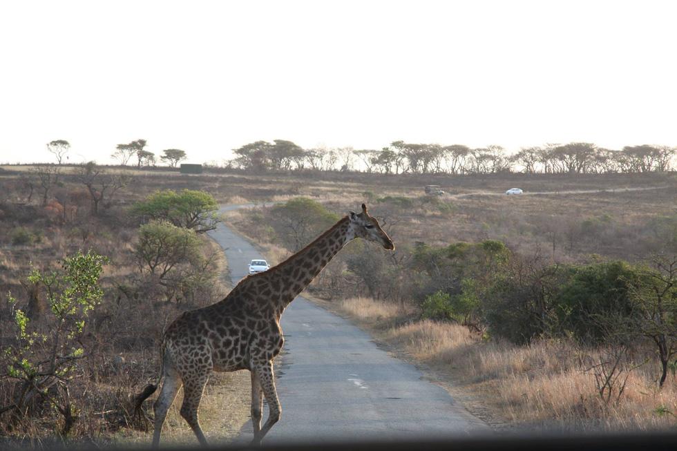 Nhà bảo tồn động vật 9X và 100 điều nhỏ nhặt cho trái đất - Ảnh 5.
