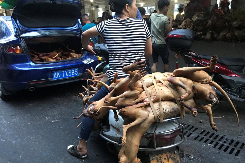 Thế giới trong tuần qua ảnh: lễ hội ăn thịt chó ở Trung Quốc - Ảnh 4.