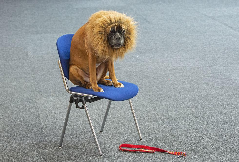 Thế giới trong tuần qua ảnh: lễ hội ăn thịt chó ở Trung Quốc - Ảnh 6.