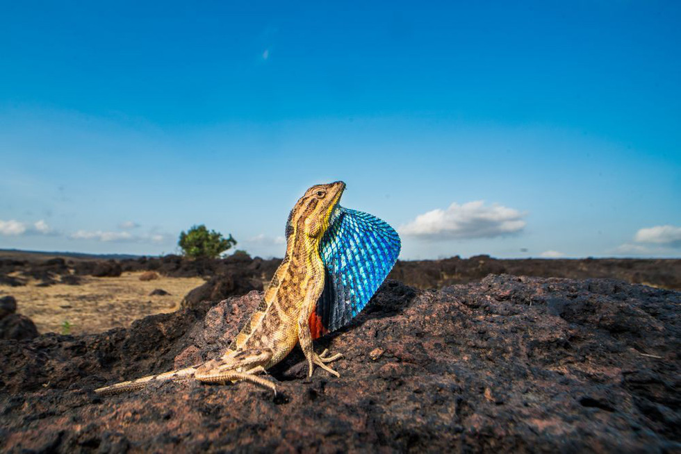 Ảnh thiên nhiên đẹp ngẩn ngơ từ cuộc thi ảnh du lịch NatGeo - Ảnh 14.