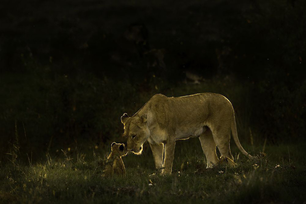 Ảnh thiên nhiên đẹp ngẩn ngơ từ cuộc thi ảnh du lịch NatGeo - Ảnh 17.