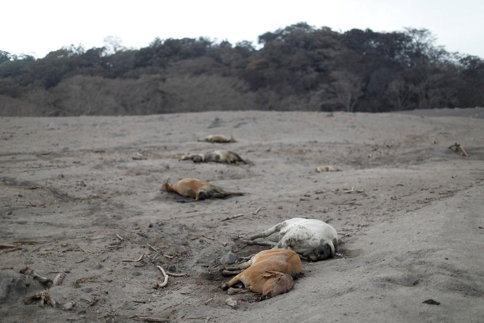 Tro bụi núi lửa xóa đi sự sống ở Guatemala - Ảnh 11.