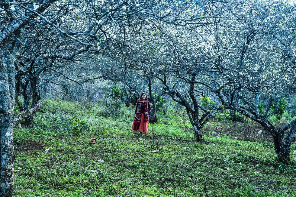 Tết Mông giữa mùa hoa mận - Ảnh 7.