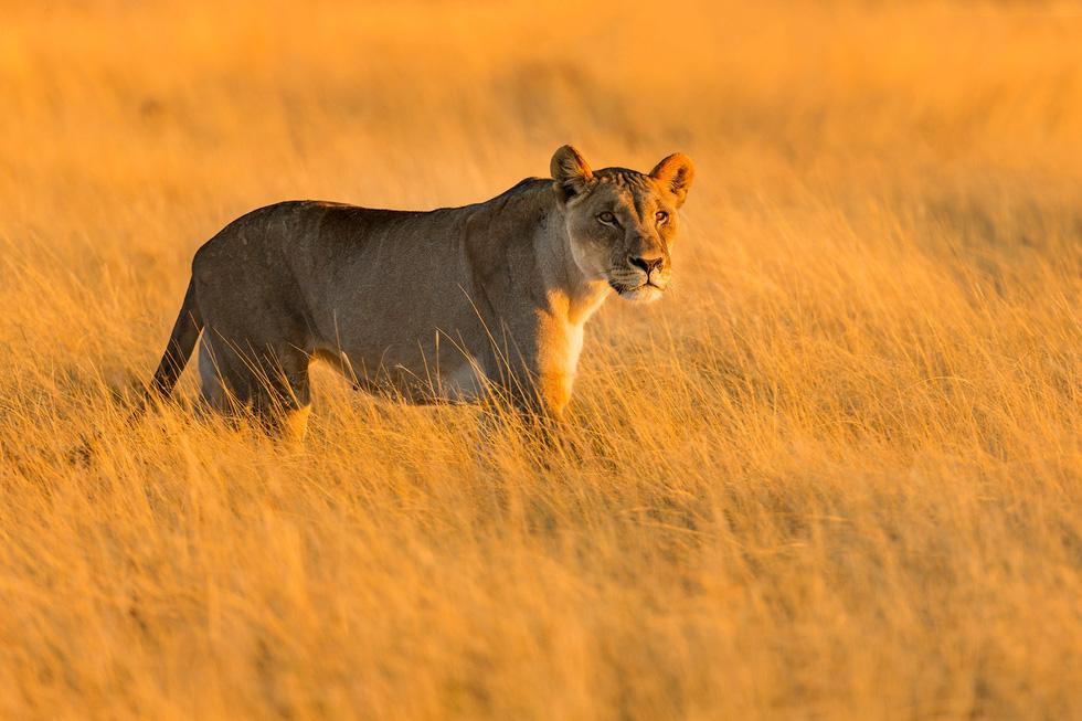 Sắc màu hoang dã Namibia - Ảnh 7.