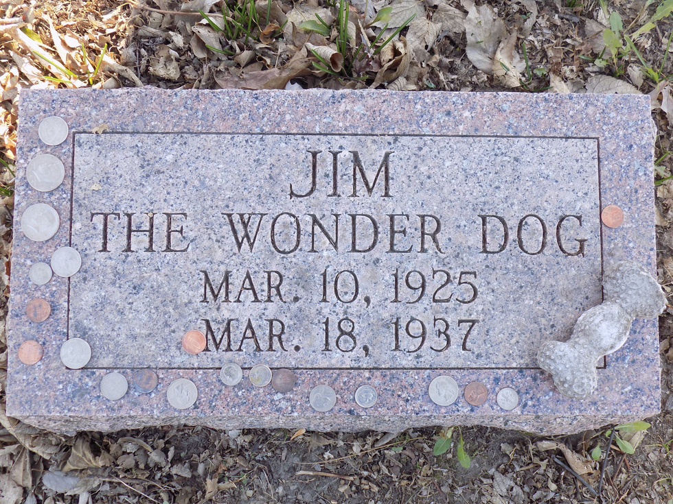 Năm Tuất thăm bảo tàng chú chó Jim - Ảnh 8.