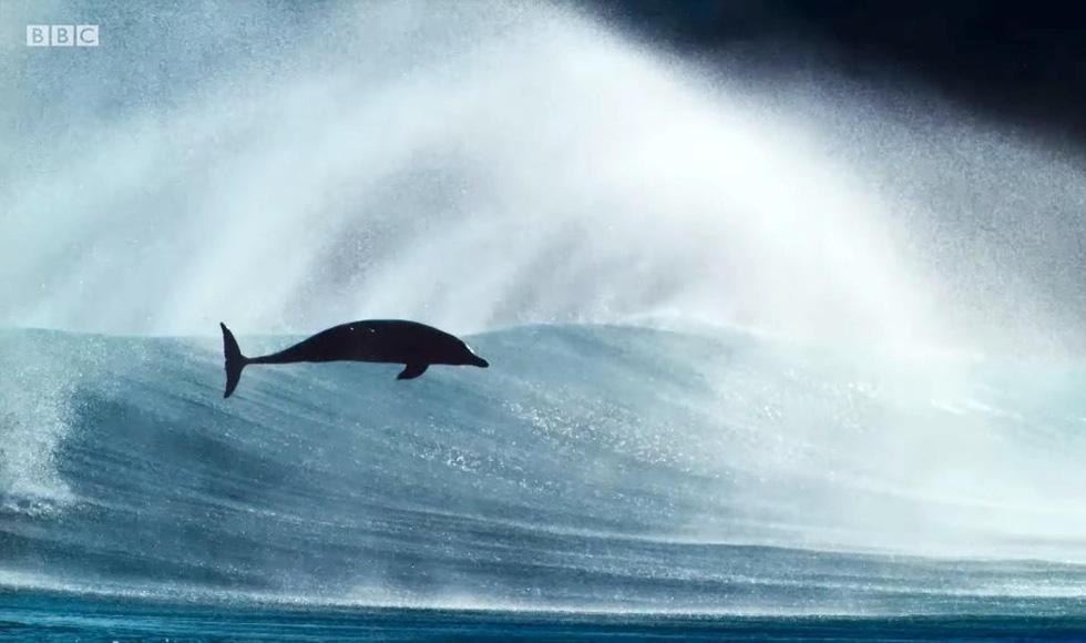 Xem Blue Planet II và ngắm những điều kỳ diệu dưới con sóng - Ảnh 16.