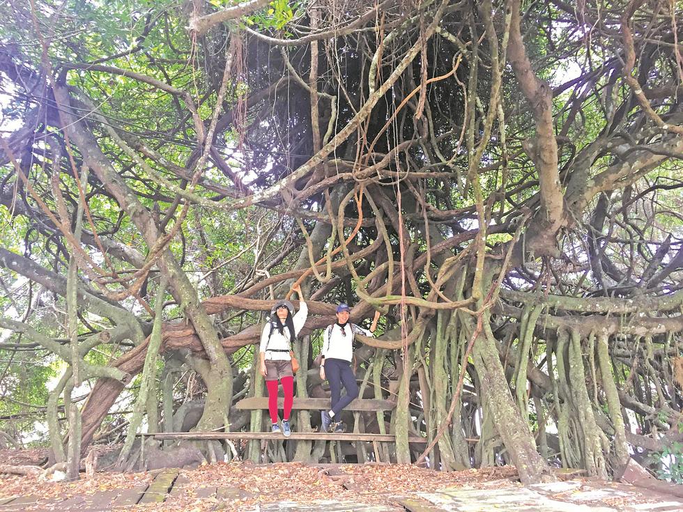 Thám hiểm rừng khộp Yok Don - Ảnh 4.