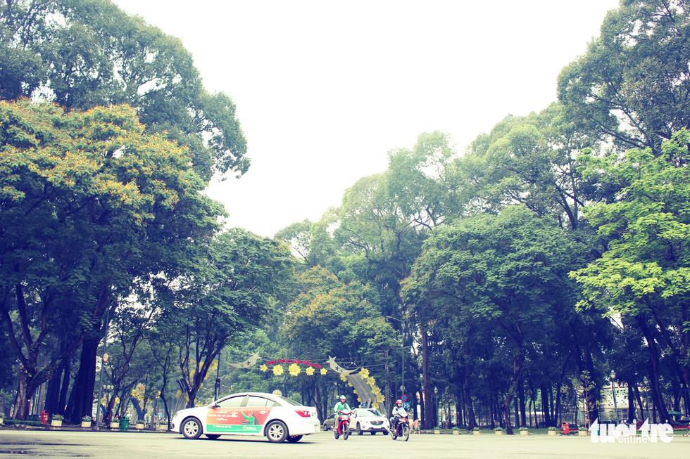 Những con đường rợp bóng cây cổ thụ ở Sài Gòn - Ảnh 1.