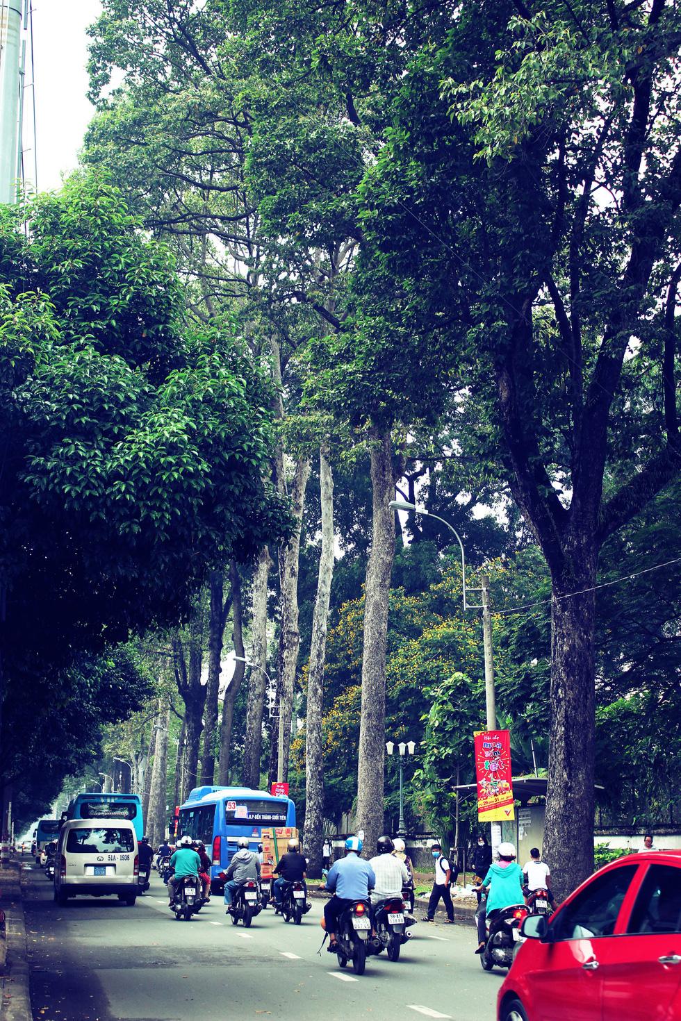 Những con đường rợp bóng cây cổ thụ ở Sài Gòn - Ảnh 12.
