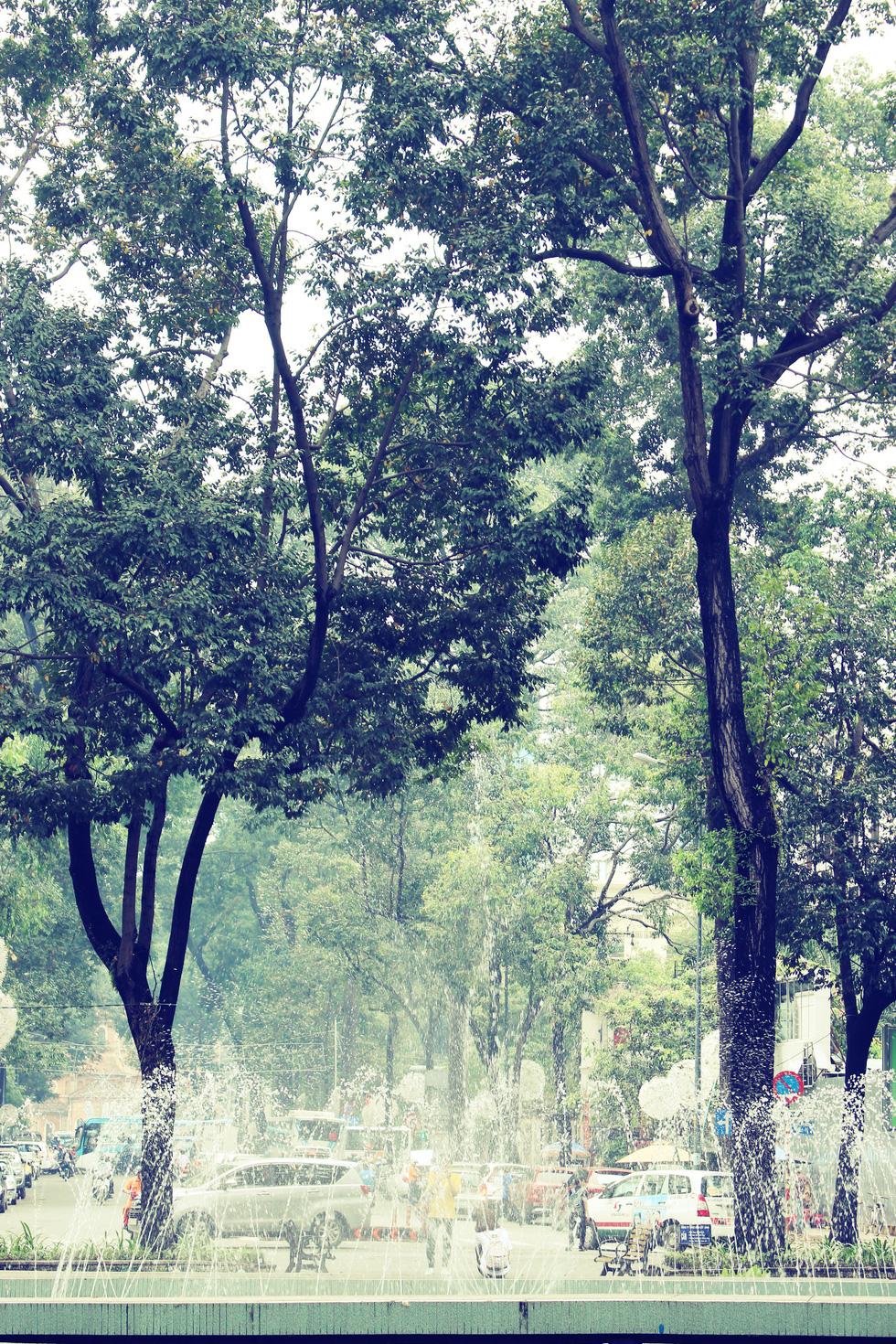 Những con đường rợp bóng cây cổ thụ ở Sài Gòn - Ảnh 7.