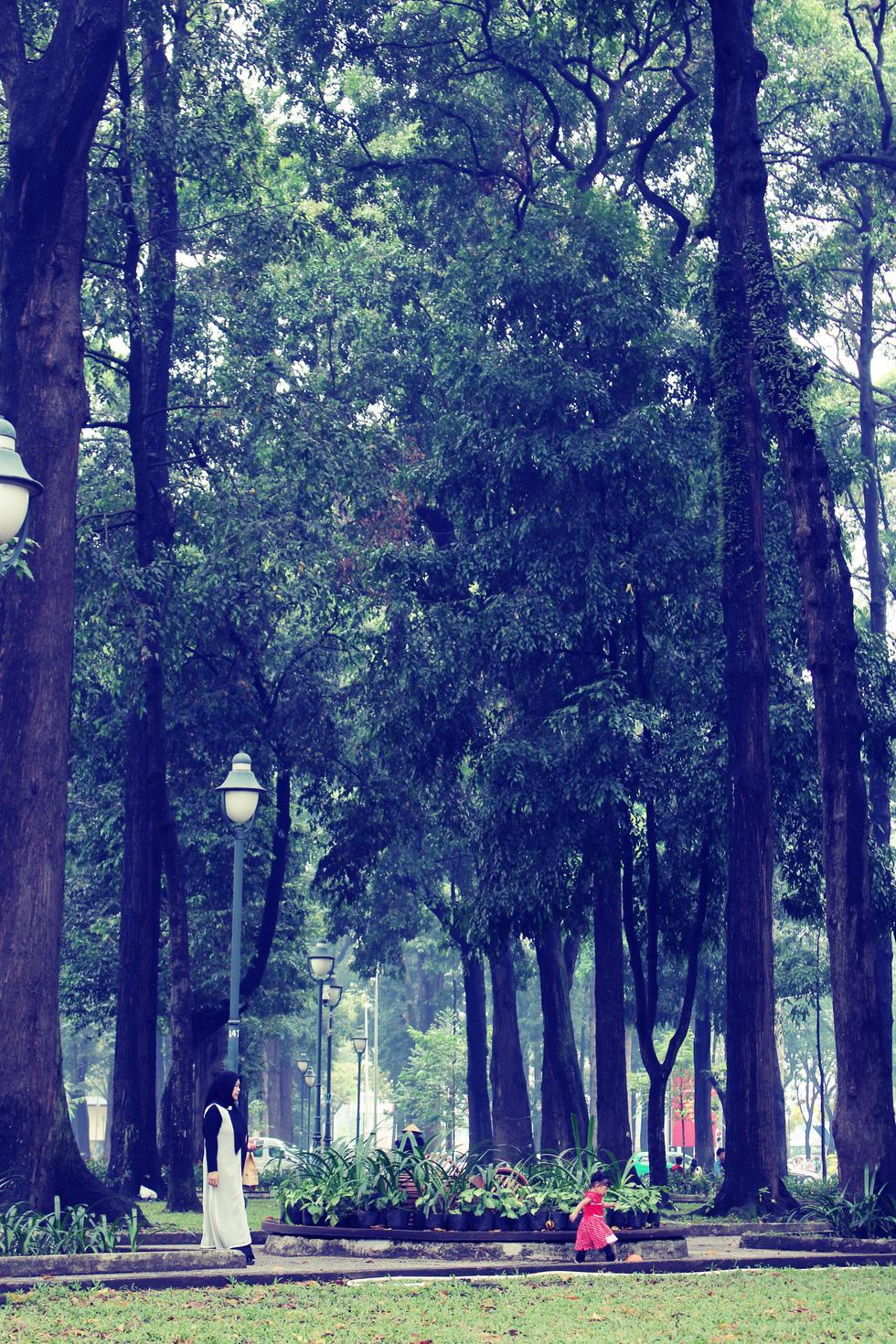 Những con đường rợp bóng cây cổ thụ ở Sài Gòn - Ảnh 2.