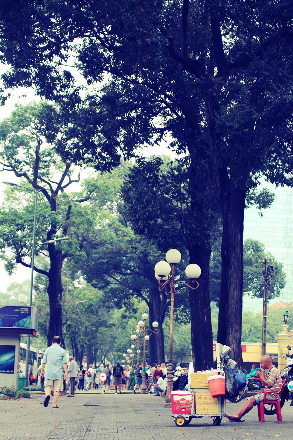 Những con đường rợp bóng cây cổ thụ ở Sài Gòn - Ảnh 3.