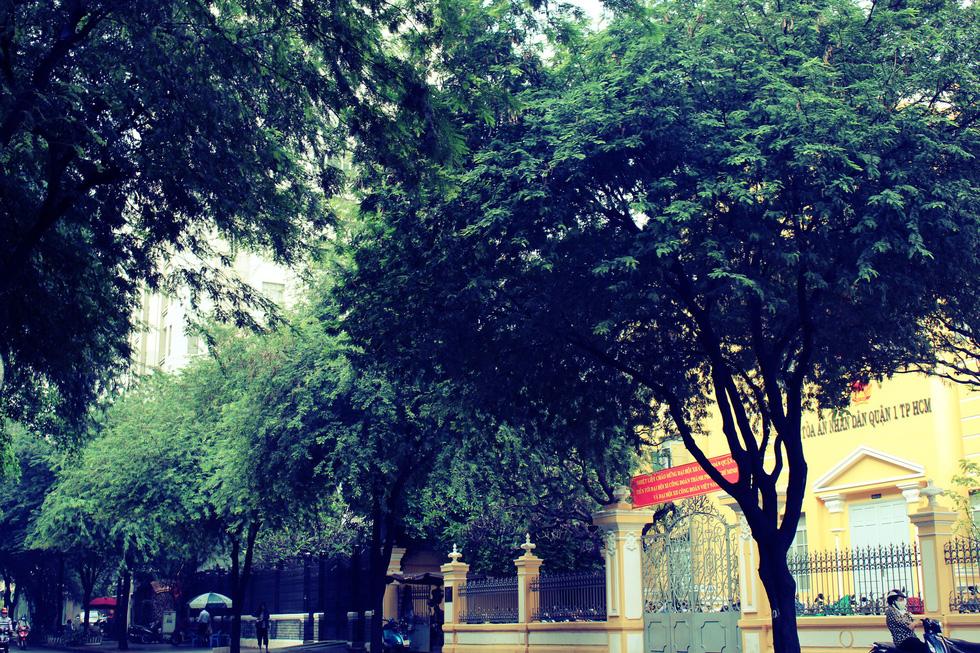 Những con đường rợp bóng cây cổ thụ ở Sài Gòn - Ảnh 4.