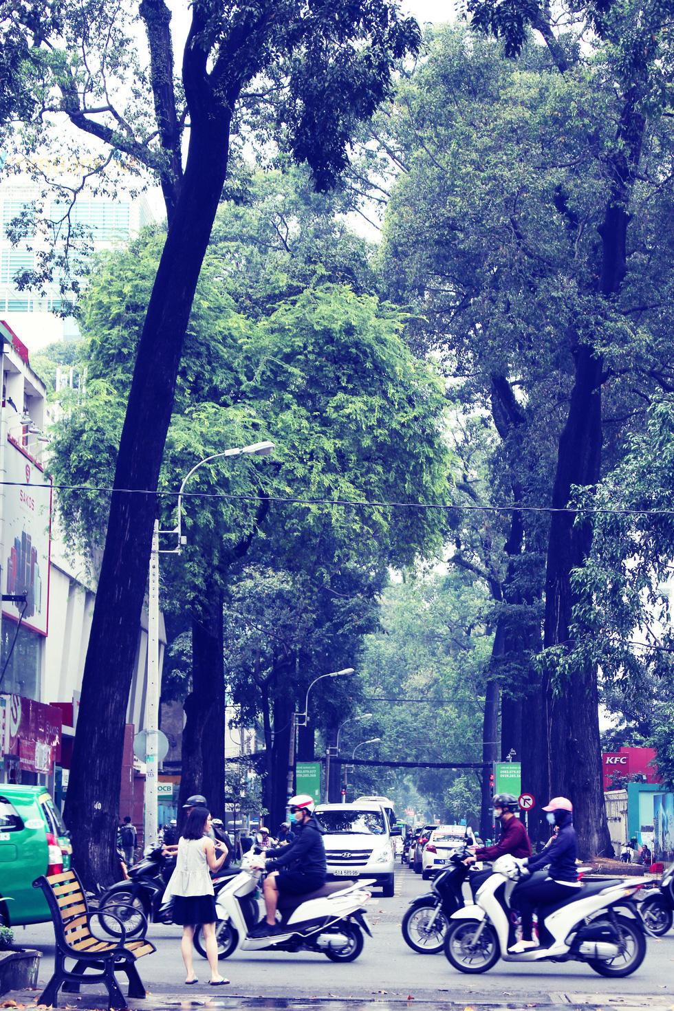 Những con đường rợp bóng cây cổ thụ ở Sài Gòn - Ảnh 6.
