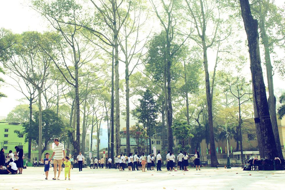 Những con đường rợp bóng cây cổ thụ ở Sài Gòn - Ảnh 8.