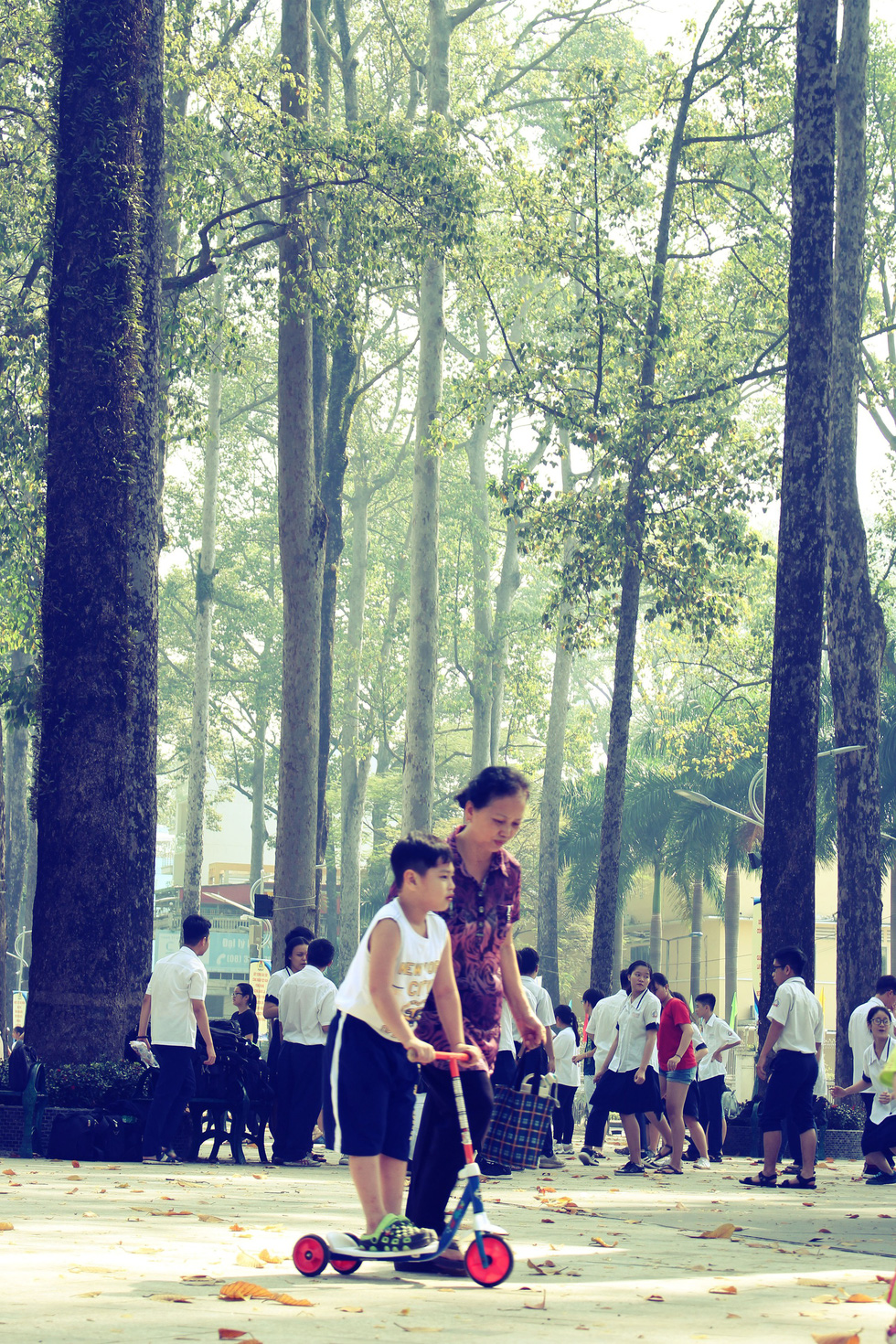 Những con đường rợp bóng cây cổ thụ ở Sài Gòn - Ảnh 9.