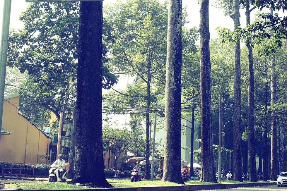 Những con đường rợp bóng cây cổ thụ ở Sài Gòn - Ảnh 10.
