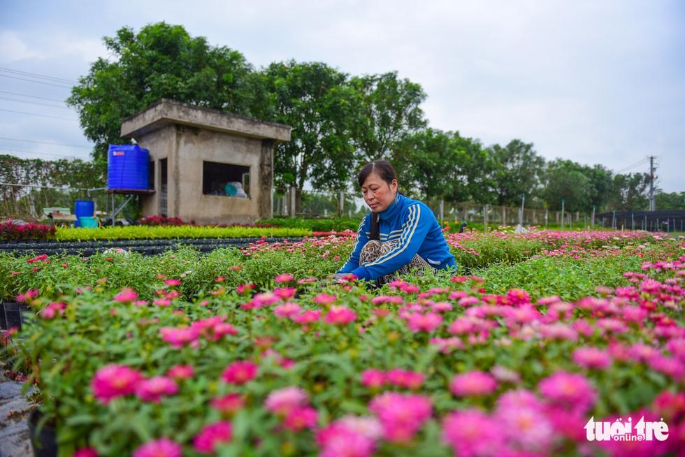 Xem hoa, chó Phú Quốc trước ngày lên đường hoa Nguyễn Huệ - Ảnh 6.